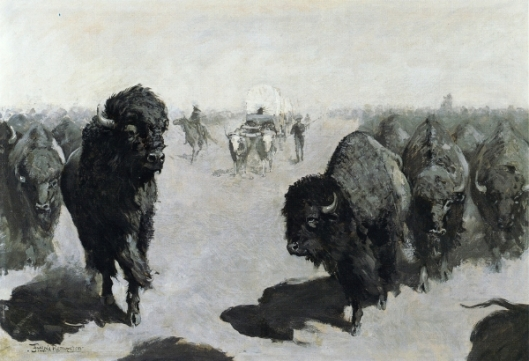 Lane Through The Buffalo Herd