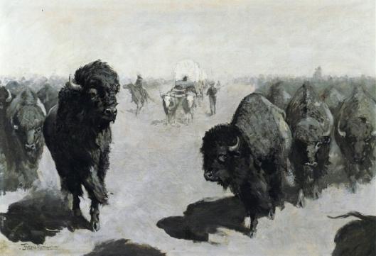 Lane Through The Buffalo Herd