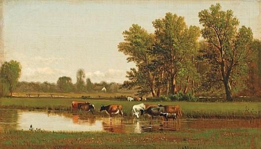 Cattle Watering On A Farm