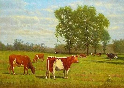 Cow Scene