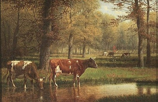 Cows Watering In A Stream