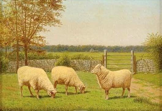 Prized Sheep