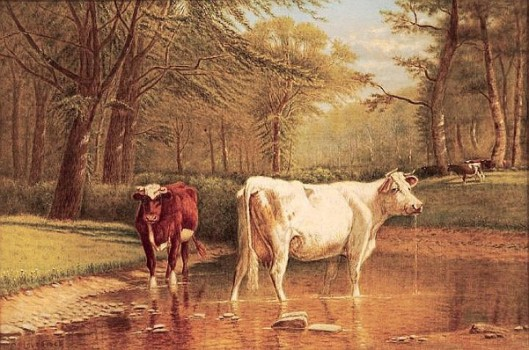 Two Cows Standing In A Stream