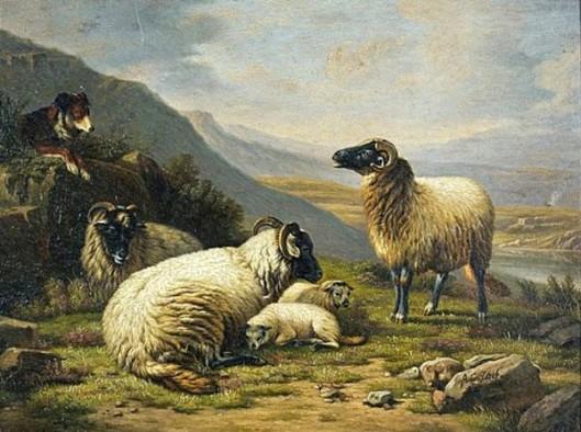 Big Horn Sheep And Dog