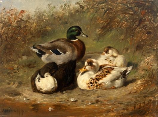 Male Mallard With Three Ducks