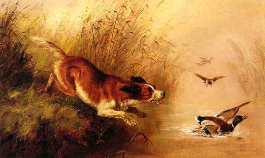 Spaniel Chasing Ducks