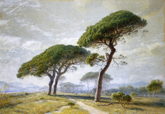 View Of Cannes, With Parasol Pines