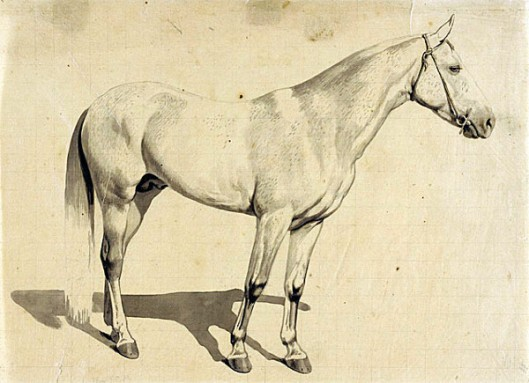 Horse-Grey