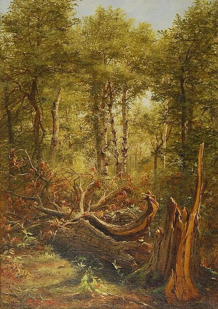 Forest Interior With Fallen Tree