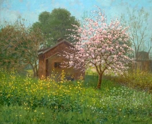 Almond Blossoms And Wild Mustard, Saratoga, California