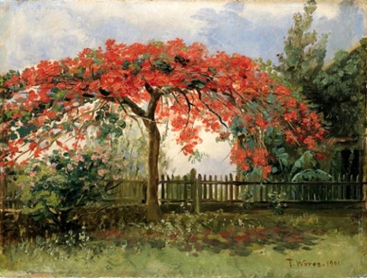 Flowering Tree, Honolulu