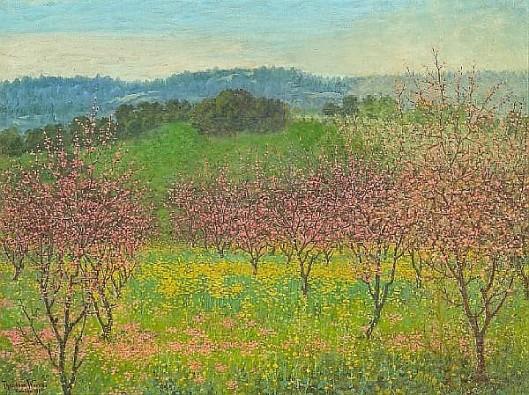 Peach Blossoms, Saratoga, California