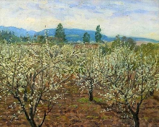 Prune Blossoms, Saratoga, CA