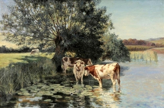 Cows Watering In A Pond