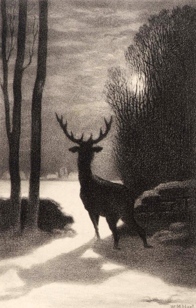 Stag In The Moonlight