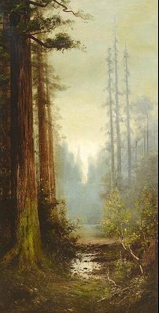 Majestic California Redwoods