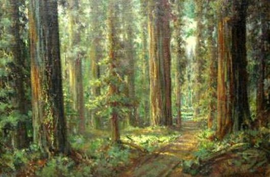 Forest Of Western Sequoias
