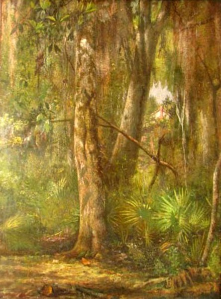 Florida Forest Landscape