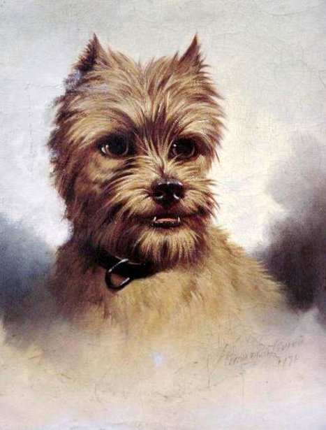 Prized Norfolk Terrier