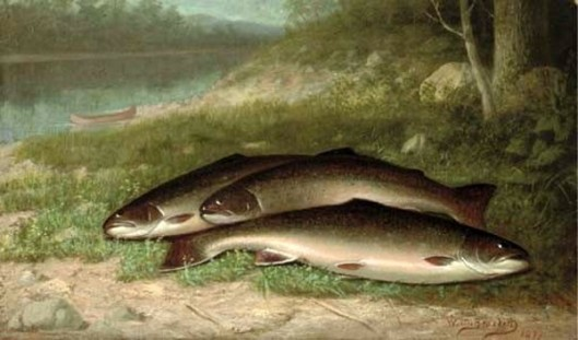 Trout On A River Bank