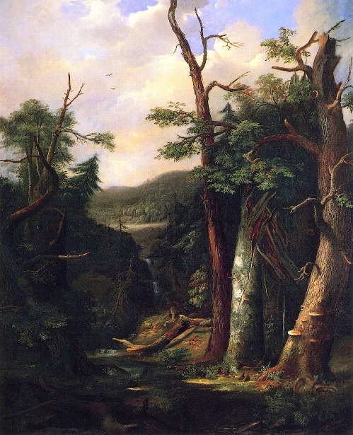 Aftermath Of A Tornado - Western Forest