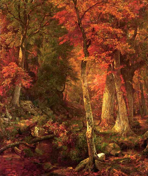 Forest Interior In Autumn
