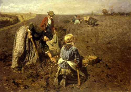 The Potato Harvest