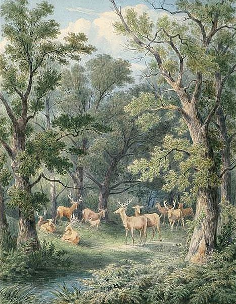 Forest Scene With Deer In A Clearing