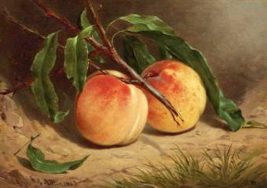 Study Of Peaches From Nature