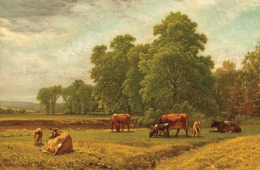 Grazing Cattle - Summer Landscape With Cattle