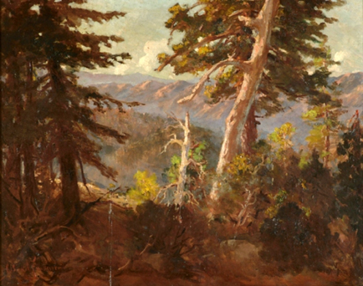 Sunlit Trees In A Mountain Landscape