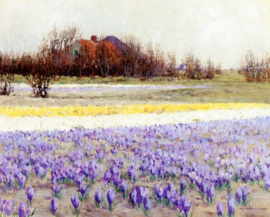 A Field Of Crocusses