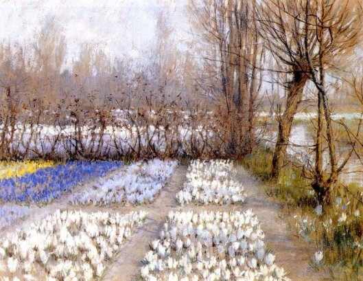 Spring Crocus Fields