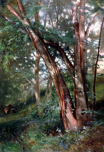 An Elm Grove