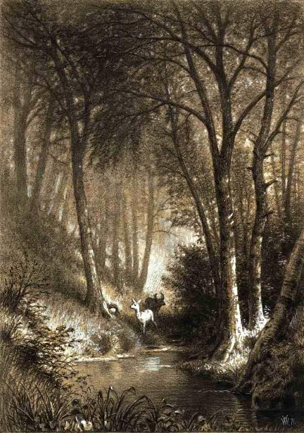 Forest Interior With Pair Of Deer