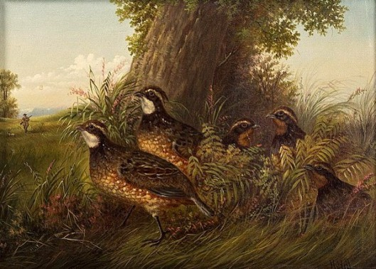A Family Of Quail