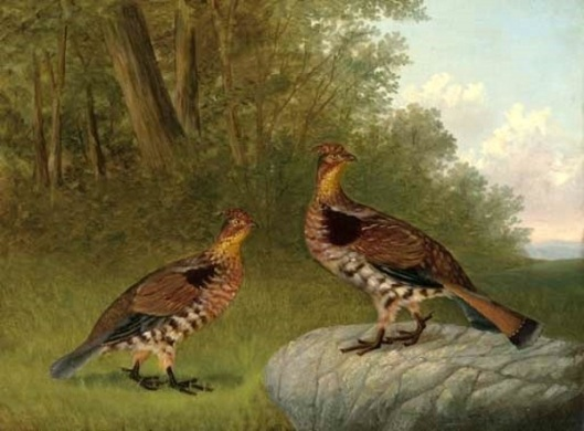 A Pair Of Ruffled Grouse Beside A Wood