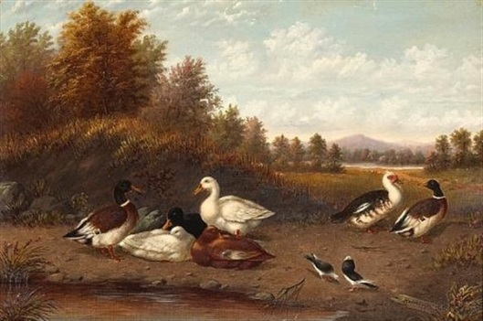 A Raft Of Ducks Near A Pond