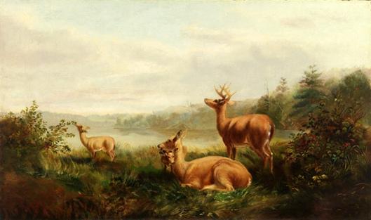Adirondack Deer