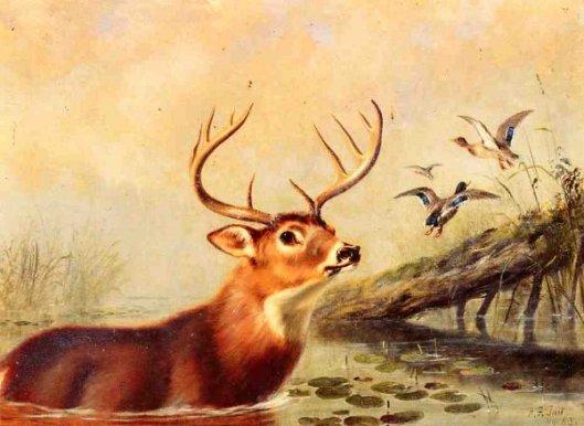 Buck In A Marsh