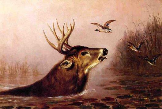 Deer In Marsh