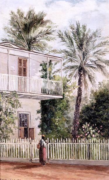 Dr. Peck's Palm Trees, Saint Augustine