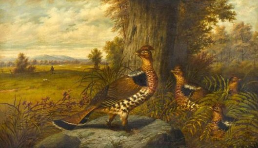 Family Of Grouse With A Hunter Approaching