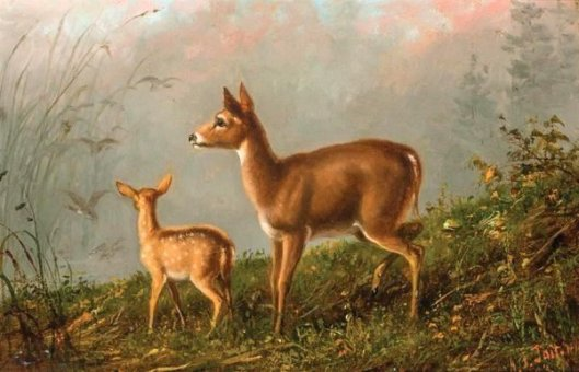 Fawn, Doe And Ducks