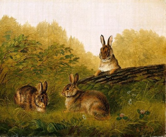 Rabbits On A Log