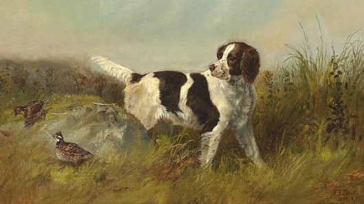 Setter Dog With Quail