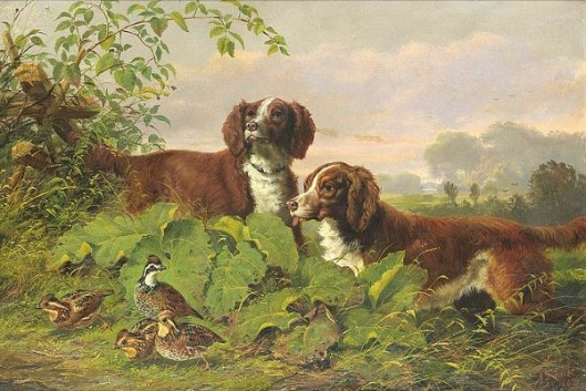 Two Setters And Quail