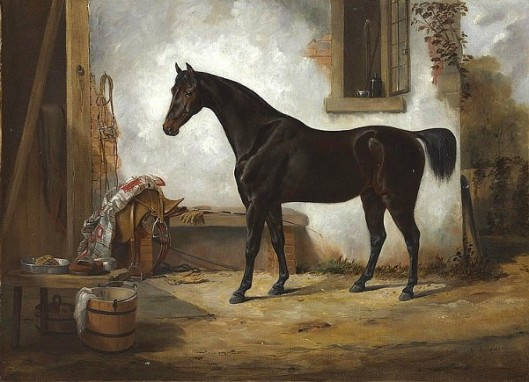A Celebrated Trotting Horse