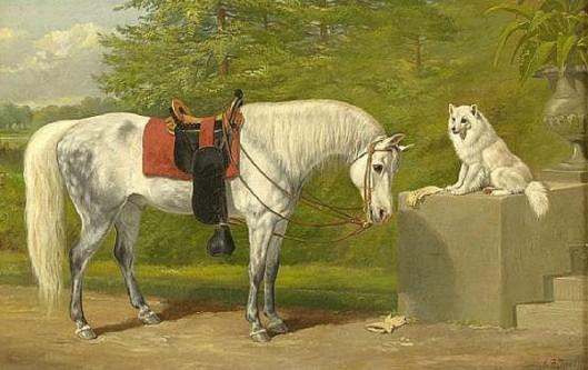 A Young Arabian Horse And An American Eskimo Dog