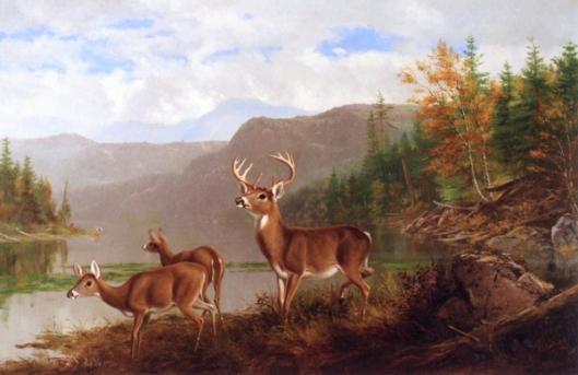 Adirondacks, October